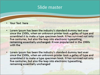Waterlily PowerPoint Template - Slide 2
