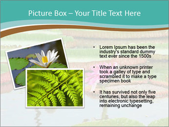 Waterlily PowerPoint Template - Slide 20