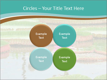 Waterlily PowerPoint Template - Slide 38