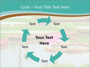 Waterlily PowerPoint Template - Slide 62