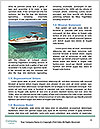 0000090951 Word Template - Page 4