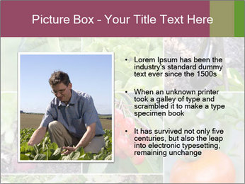 Organic Veggies PowerPoint Template - Slide 13