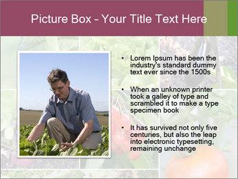 Organic Veggies PowerPoint Templates - Slide 13