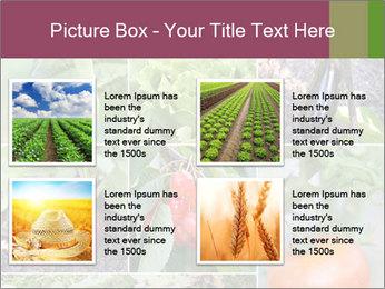 Organic Veggies PowerPoint Templates - Slide 14