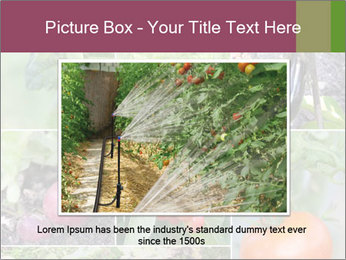 Organic Veggies PowerPoint Template - Slide 15