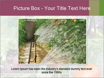 Organic Veggies PowerPoint Templates - Slide 15