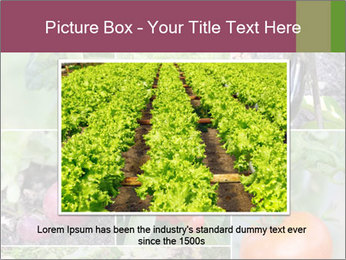 Organic Veggies PowerPoint Template - Slide 16