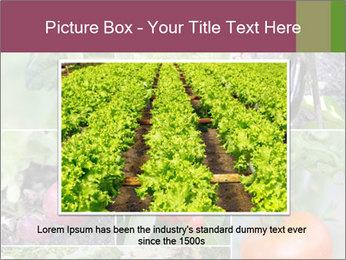 Organic Veggies PowerPoint Templates - Slide 16