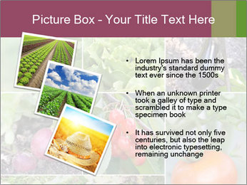 Organic Veggies PowerPoint Template - Slide 17