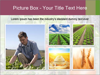 Organic Veggies PowerPoint Template - Slide 19