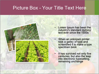 Organic Veggies PowerPoint Template - Slide 20