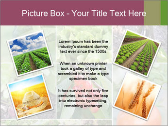 Organic Veggies PowerPoint Templates - Slide 24