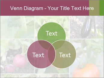 Organic Veggies PowerPoint Template - Slide 33