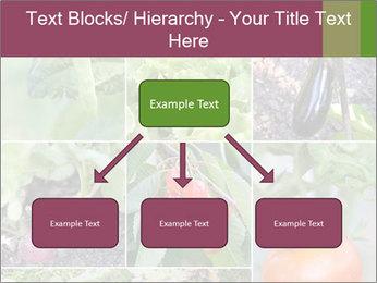 Organic Veggies PowerPoint Templates - Slide 69