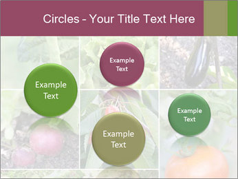 Organic Veggies PowerPoint Templates - Slide 77