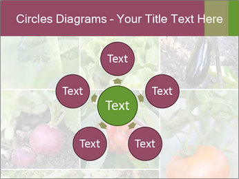 Organic Veggies PowerPoint Template - Slide 78