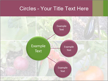Organic Veggies PowerPoint Template - Slide 79