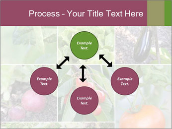 Organic Veggies PowerPoint Template - Slide 91