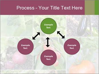 Organic Veggies PowerPoint Templates - Slide 91