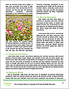 0000090991 Word Template - Page 4