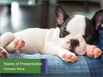 Black And White French Bulldog PowerPoint Templates - Slide 1