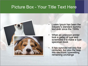 Black And White French Bulldog PowerPoint Templates - Slide 20