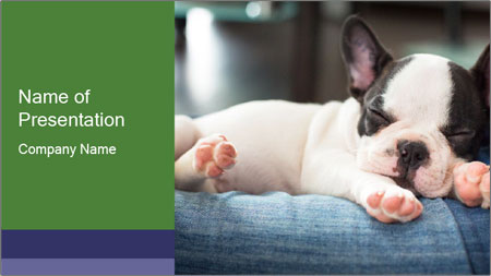 Black And White French Bulldog PowerPoint Template