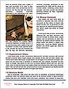 0000091029 Word Templates - Page 4
