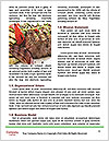 0000091068 Word Templates - Page 4