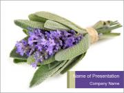 Lavender and sage PowerPoint Templates
