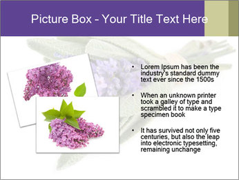 Lavender and sage PowerPoint Template - Slide 20