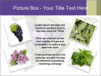 Lavender and sage PowerPoint Template - Slide 24