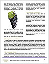 0000091107 Word Template - Page 4
