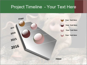 Farm Pigs PowerPoint Template - Slide 26