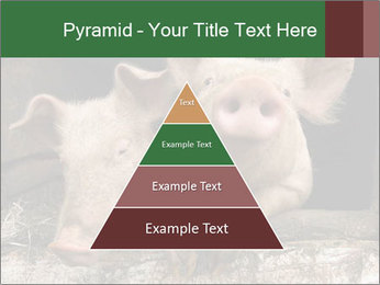 Farm Pigs PowerPoint Template - Slide 30