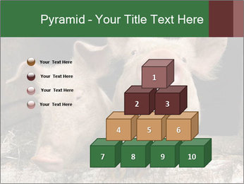 Farm Pigs PowerPoint Template - Slide 31