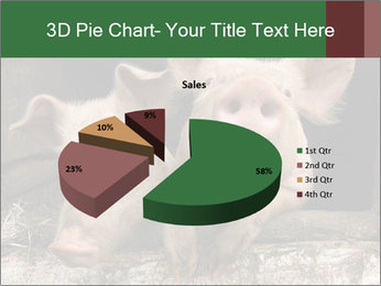 Farm Pigs PowerPoint Template - Slide 35