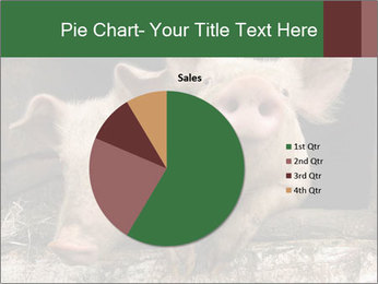 Farm Pigs PowerPoint Template - Slide 36