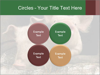 Farm Pigs PowerPoint Template - Slide 38