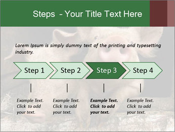 Farm Pigs PowerPoint Template - Slide 4