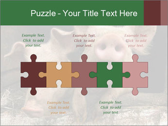 Farm Pigs PowerPoint Template - Slide 41