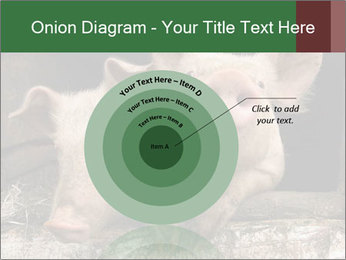Farm Pigs PowerPoint Template - Slide 61