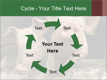 Farm Pigs PowerPoint Template - Slide 62