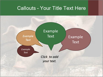 Farm Pigs PowerPoint Template - Slide 73