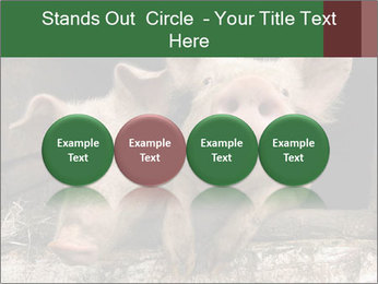Farm Pigs PowerPoint Template - Slide 76