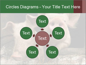 Farm Pigs PowerPoint Template - Slide 78