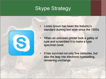 Farm Pigs PowerPoint Template - Slide 8