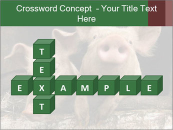 Farm Pigs PowerPoint Template - Slide 82