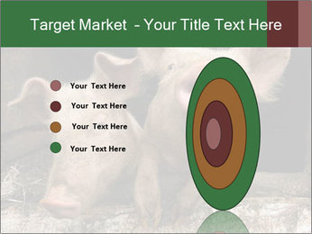 Farm Pigs PowerPoint Template - Slide 84
