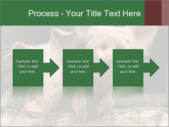 Farm Pigs PowerPoint Template - Slide 88